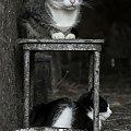 #kot #koty #wieś