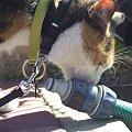 spacer z Lu #kot #koty #kwiatki #maj