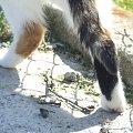 Lu #kot #koty #kwiatki #maj #popiół