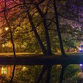 Park Oliwski nocą #Drzewa #kolor