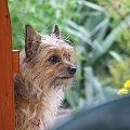 kizulinka #MałyPiesek #pies #PiesModel #piesek #suczka #ZajebistaFotka
