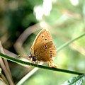 #motyl #roślina #makro