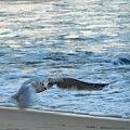 Lot #ptak #mewa #bird #seagull