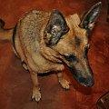 Luna, po 13 latach przyjaźni odeszła 03.07.13. Do dziś niewierze że jej już nie ma :( #agama #gad #gady #jamnik #kanarek #owczarek #pies #przyjaciele #psy #ptak
