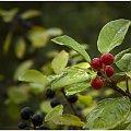 Na koniec lata #bitwa #fotografia #jesień #kwiaty #las #lato #natura #przesilenie #przyroda #rosa #wrzesień #wrzos #wrzosy #zając #zdjęcia #zmagania #art #barwa #blog #brzoza #fotmart #kolor #kołobrzeg #liście #październik #szron #wpis #życie
