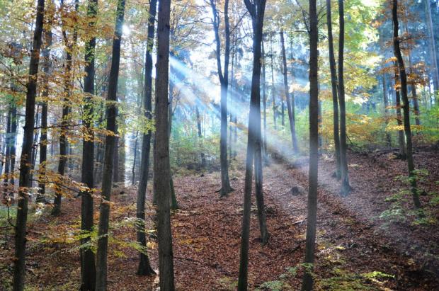 promienie słoneczne wdzierają się do lasu