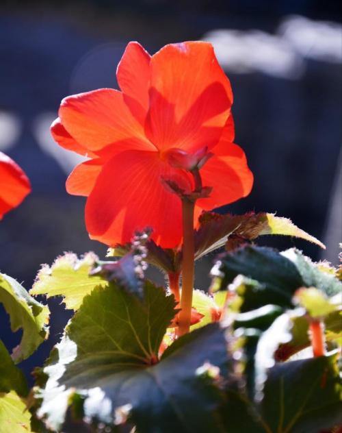 Twarzą do słońca ... #kwiaty #przyroda #CZARNYRYCERZ