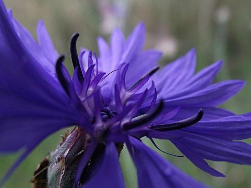 #kwiat