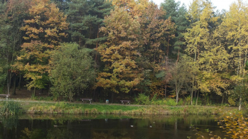 Jesień #drzewa #grzyby #jesień #katowice #las #park #woda