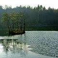 ...a co to? jezioro czy kałuża? wyspa czy kępa traw? jesień czy zima?... #jezioro #woda #staw #Ożarów
