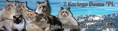 Z KOCIEGO DOMU*PL - hodowla kotów Syberyjskich i Neva Masquerade