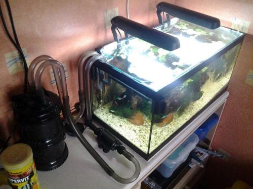 Lampki Aquael DecoLight 2x11W w 54L #akwarium #amazonia #amazonka #aquael #decolight #multikani