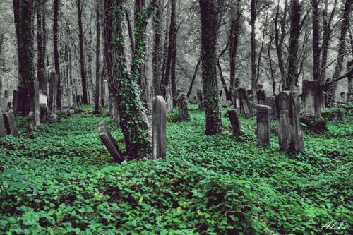 na cmentarzu ... #cmentarz #las