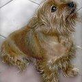 Przyszedł i siadł ...na świeżo umytej podłodze #pies #dog