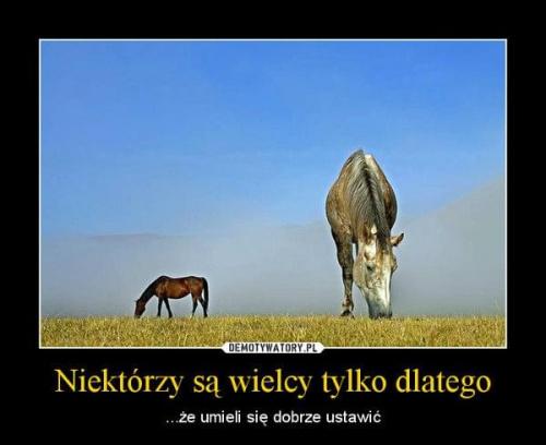 http://images61.fotosik.pl/814/de6f6179aecd7ba9med.jpg