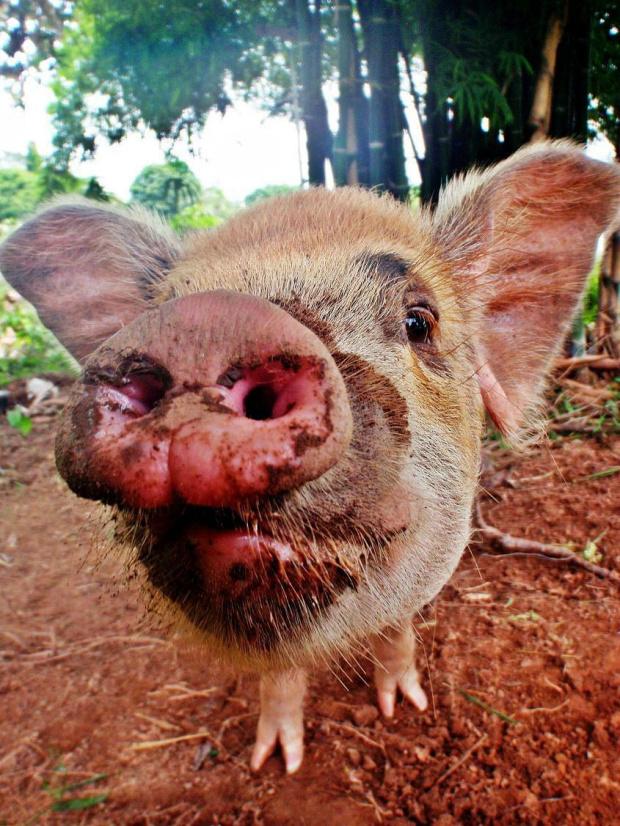 raciczki welcome to :) #świnia