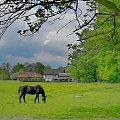 k jak koń #koń #pastwisko #łąka #gospodarstwo #stadnina